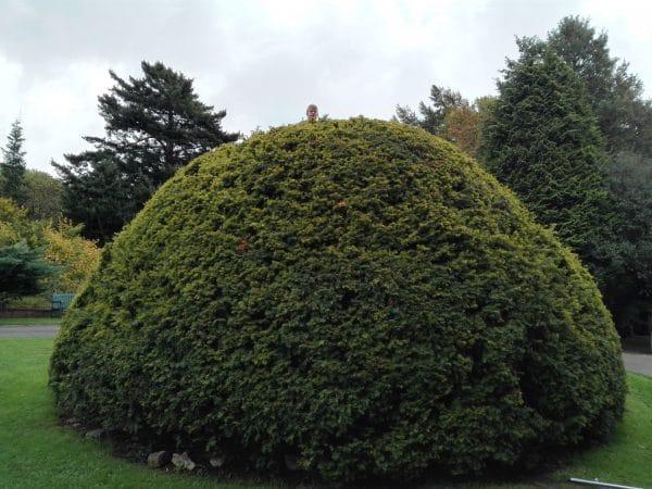 hello du buisson à manjushri