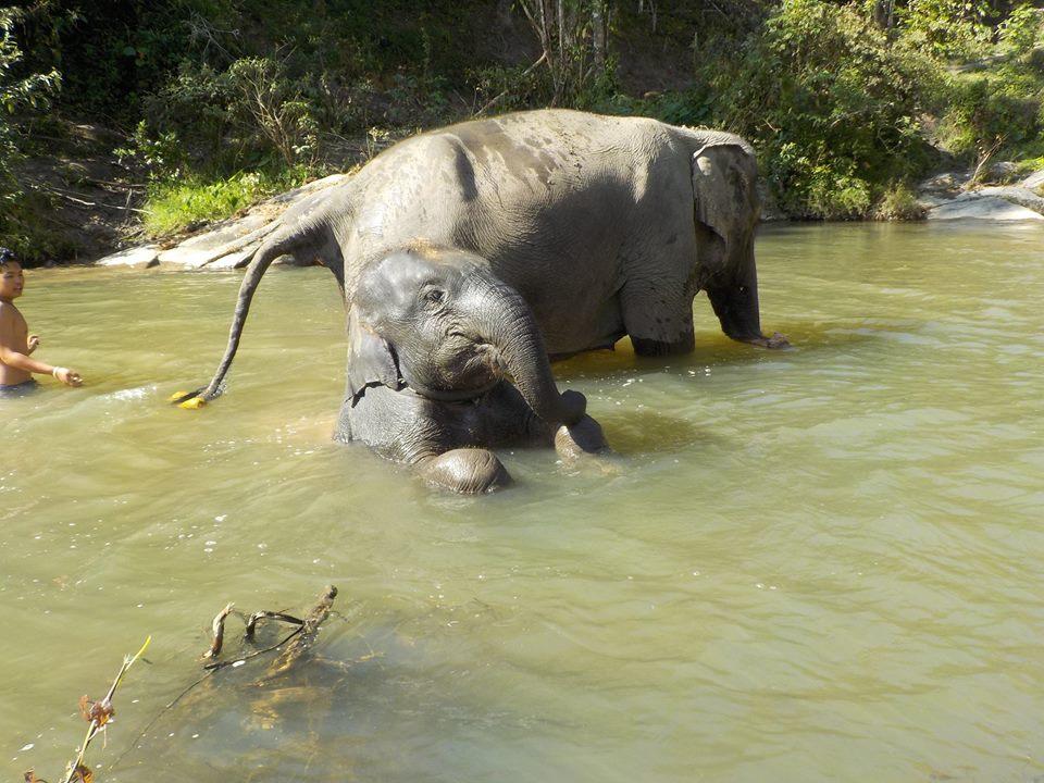 sanctuaire pour éléphants Chiang Mai