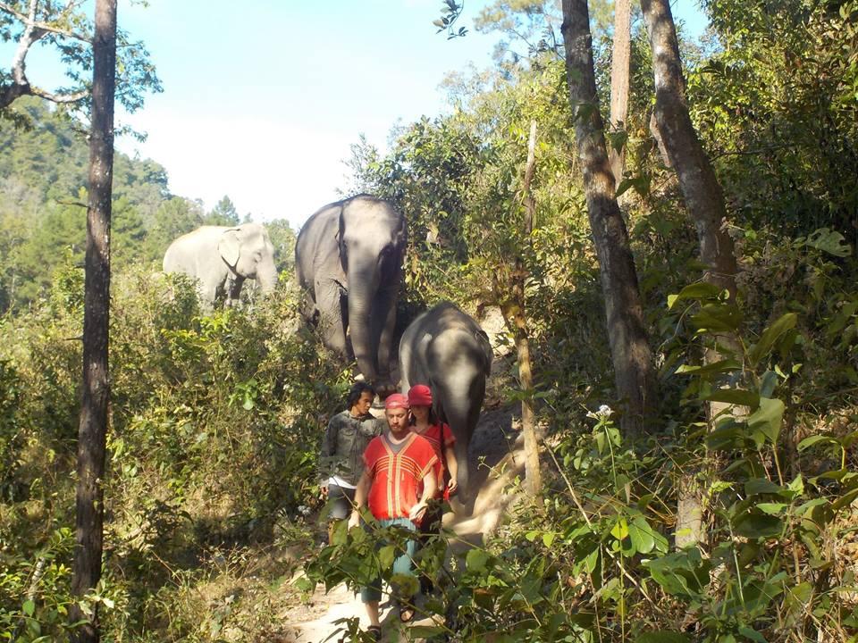 balade éléphants Chiang Mai