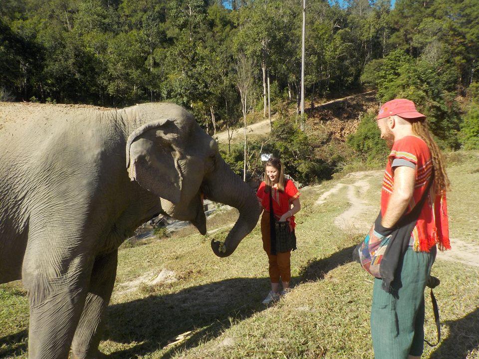 nourrir les éléphants en Thaïlande