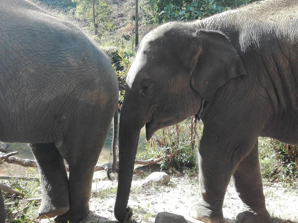 éléphants asie