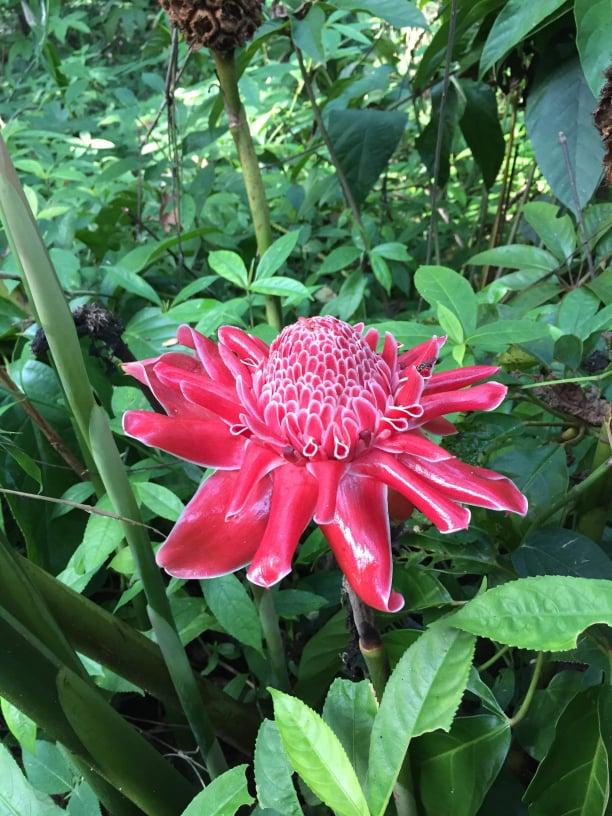 Fleur nature Chiang Dao