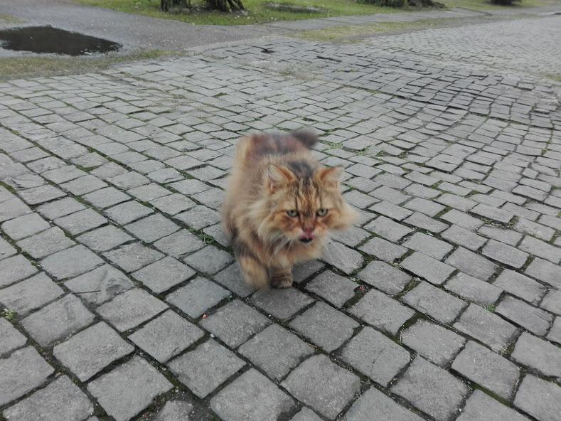 houtong chat taïwan