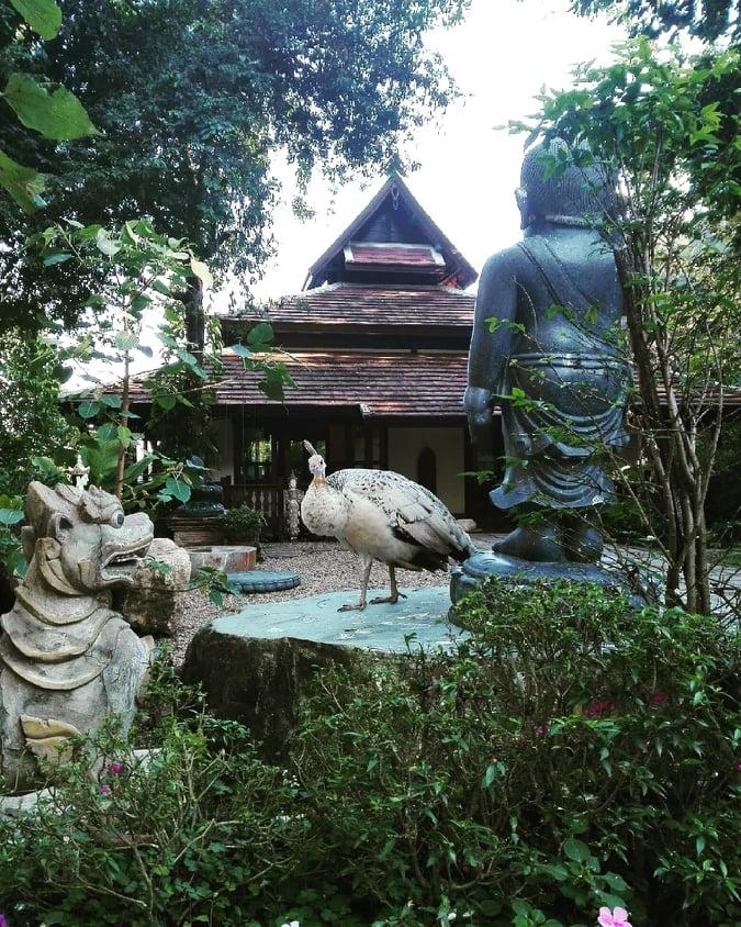 temple Wat Pha Lat