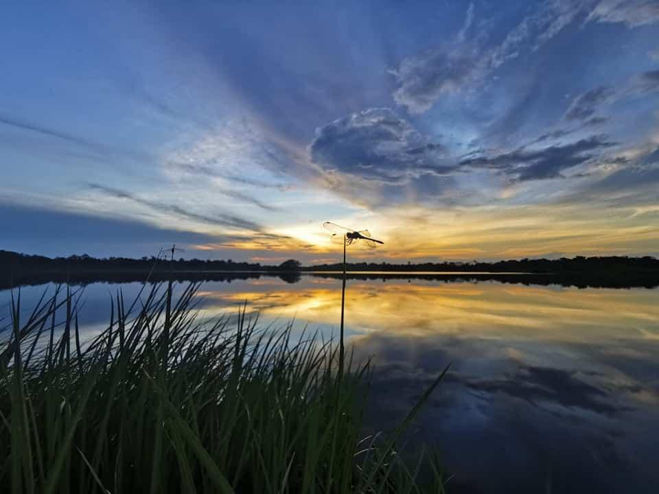 coucher de soleil en amazonie