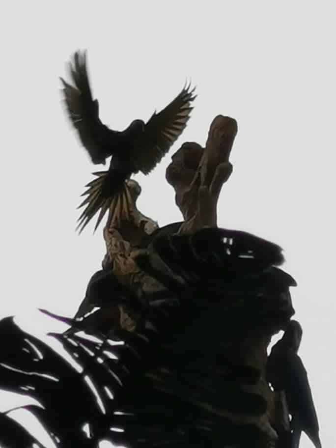 oiseau yasuni
