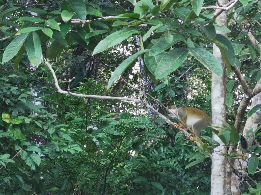 singe réserve yasuni